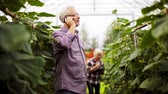 olericulture : old man calling on smartphone in farm greenhouse