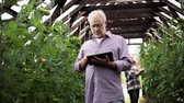 olericulture : old man with tablet pc in greenhouse on farm