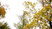 organic : autumn forest with different trees over sky Stock Footage