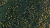 топ : aerial view to green summer forest and power line
