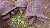 Сейшельские : giant tortoises outdoors