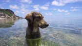 transparente : dog in sea or indian ocean water