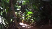 natural : path in jungle woods with palm trees at africa