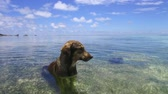 идиллический : dog in sea or indian ocean water