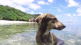Сейшельские : dog in sea or indian ocean water on seychelles
