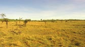 besta : animals grazing in savanna at africa