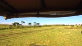 dostihy : off-road car driving across savanna at africa