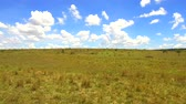 pasto : animals grazing in savanna at africa