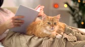 tabby : red tabby cat and woman reading book at home