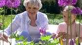 внучка : grandmother and girl planting flowers at garden