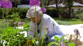 blooming : senior woman planting flowers at summer garden