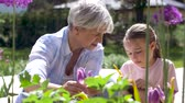 unoka : grandmother and girl study flowers at garden