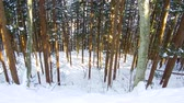 japão : winter forest in japan Vídeos