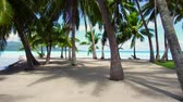 nobody : palm trees on tropical beach in french polynesia Stock Footage