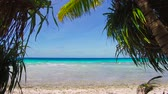 coco : tropical beach with cocopalms in french polynesia