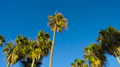 california landscape : palm trees over sky at venice beach, california