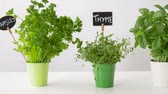 маркер : herbs or spices with name plates in pots on table
