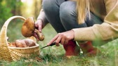 bota : young woman picking mushrooms in autumn forest Stock Footage