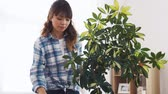 dwarf : happy asian woman cleaning houseplant at home