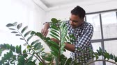junge pflanze : indian man cleaning houseplant at home Stock Footage