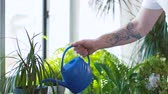 ev işi : man watering houseplants at home Stok Video