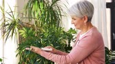 sprzątanie : happy senior woman cleaning houseplant