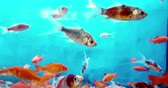 colorful fish tropical in the aquarium with blue water and real environment, flowing with slow motion, concept of
