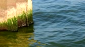 zrezivělý : The moss wall is green. Calm water and Sunny weather. The breakwater protects the shore from the water.