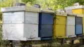 cera de abelha : honey bee home in nature