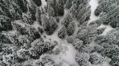 movement : aerial view forest in winter time
