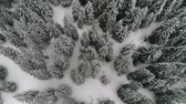 congelamento : aerial view forest in winter time