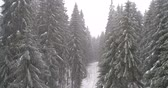 congelamento : Beautiful Winter forest