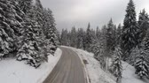 pano de fundo : Beautiful Winter forest
