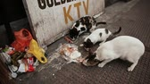 abandoned alley : MANILA, PHILIPPINES - JANUARY 5, 2018: Stray cats eat chicken pieces on Manila Street. Philippines.