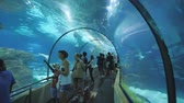 boğa : Barcelona, Spain - August 5, 2018: Tourists visits Barcelona Aquarium. Aquarium located in Port Vell, a harbor in Barcelona, Catalonia, Spain.