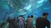 ragged : Barcelona, Spain - August 5, 2018: Tourists visits Barcelona Aquarium. Aquarium located in Port Vell, a harbor in Barcelona, Catalonia, Spain.