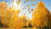 Autumn Fall Leaves Sideways - 4k Realistic Falling Leaves Video Background Loop @60fps