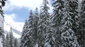 ель : Panning down from a pine tree to the river in winter mountains. Travel and adventure