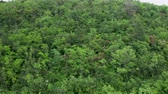 nobody : Flying over a dense green forest. Aerial footage