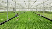 Aerial view in a greenhouse with farmers Stock Footage