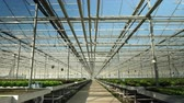Drone flying in a modern greenhouse for oraganic crop. Modern farming Stock Footage