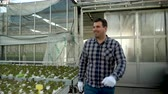 Young smiling farmer walking in greenhouse with growing green salad