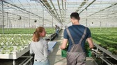 Back view of agriculture worker carrying a box of green salad in a modern greenhouse Stock Footage