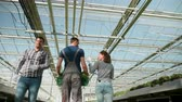 Farmers in a greenhouse with modern technology for growing green salad. Stock Footage