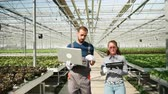mérnök : Agronomy engineers walking with laptop in a greenhouse with modern technology for growing green salad. Stock mozgókép