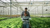 saláta : Agronomy engineers in a greenhouse checking the crop of organic green salad.