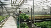 jardineiro : Farm worker in a greenhouse pushing a cart with organic green salad to storage for commerce.