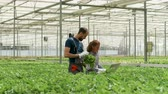 kertészet : Female engineer with farm worker in a greenhouse Stock mozgókép