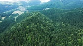 foret de pins : Drone flying above beautiful green forest in the mountains. Beautiful countryside. Vidéos Libres De Droits
