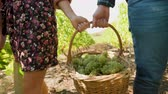 виноградник : Man and woman carrying a big basket with white grapes, front view, slow motion shot Стоковые видеозаписи